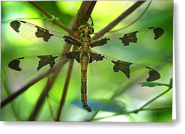 Dragonflies Greeting Cards - Dragonfly  Greeting Card by Jeff Klingler