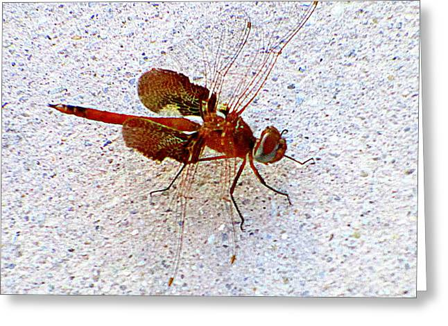 Flying Insect Greeting Cards - Dragonfly July Greeting Card by Randall Weidner