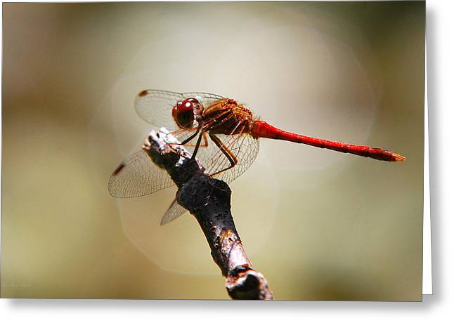 Dragonfly Art Greeting Cards - Dragonfly Light Greeting Card by Christina Rollo