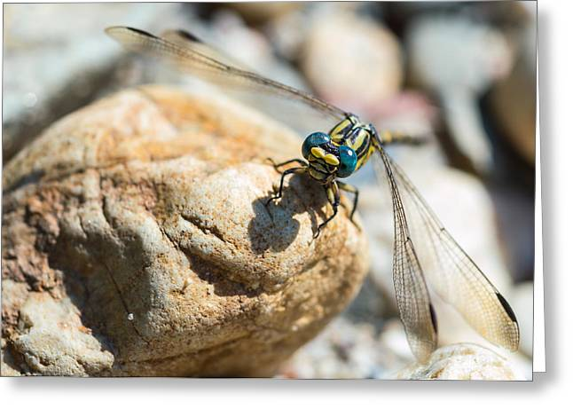 Macro Dragonfly Picture Greeting Cards - Dragonfly Greeting Card by Marco Oliveira