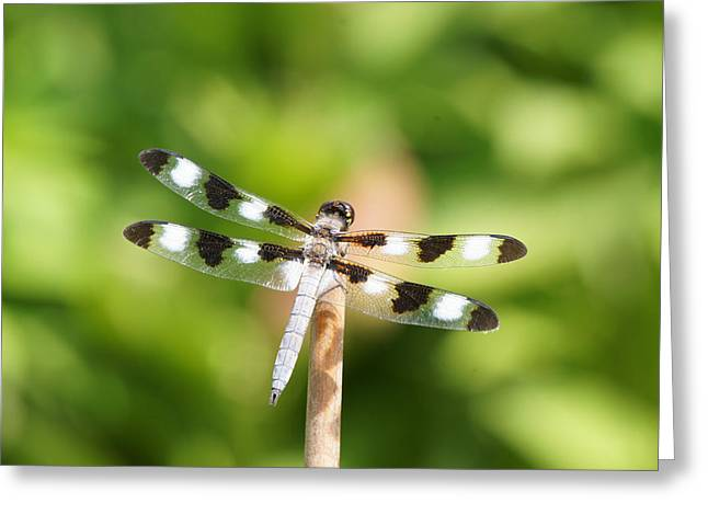 Reflections Of Infinity Llc Greeting Cards - Dragonfly On A Stick Greeting Card by Robert E Alter Reflections of Infinity