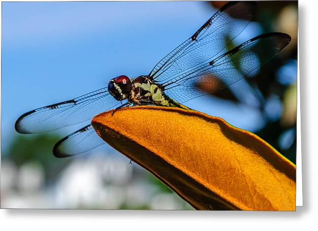 Ly Greeting Cards - Dragonfly Ready For Take Off Greeting Card by Billy Burdette