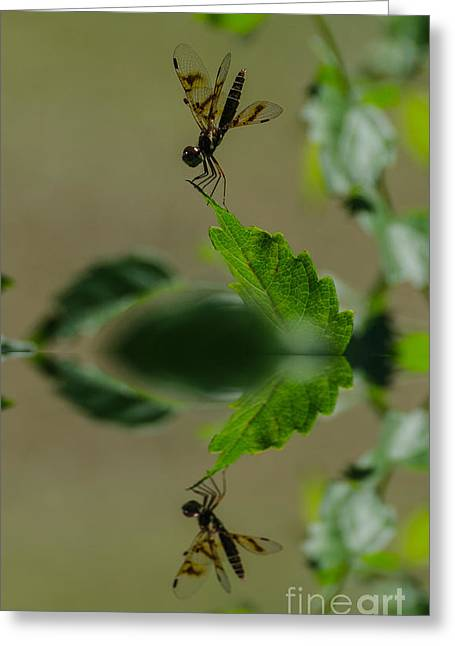 Amberwing Greeting Cards - Dragonfly Reflection Greeting Card by Donna Brown