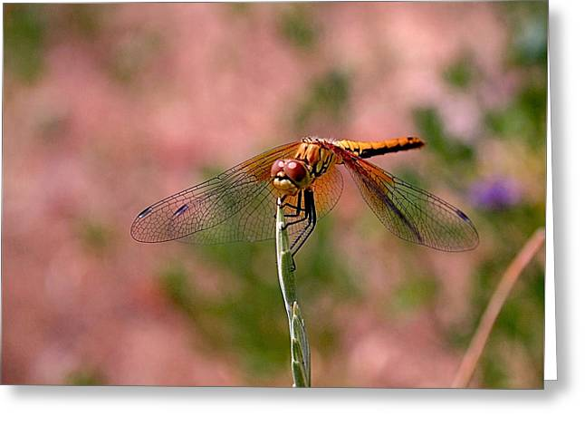 Dragonflies Photographs Greeting Cards - Dragonfly Greeting Card by Rona Black
