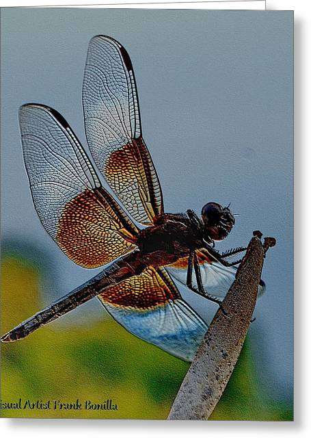 Visual Artist Frank Bonilla Greeting Cards - Dragonfly Sky Print Greeting Card by Visual Artist  Frank Bonilla