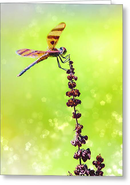 Saddlebag Greeting Cards - Dragonfly Sparkles Greeting Card by Bill Tiepelman