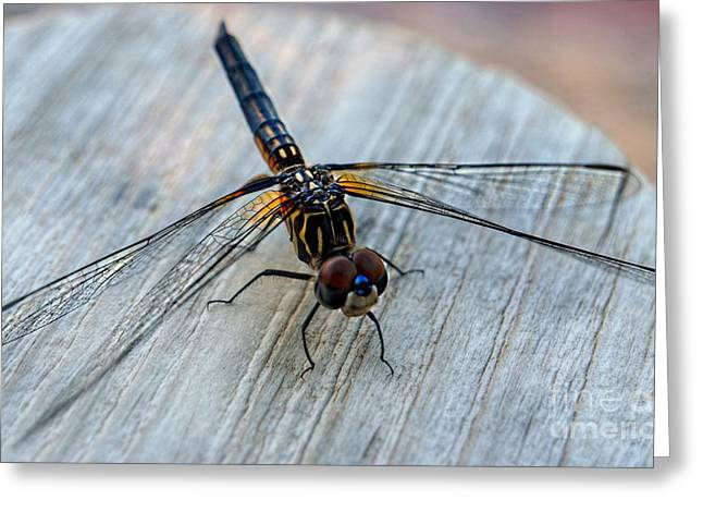 Macro Dragonfly Picture Greeting Cards - Dragonfly   Stopped to Say Hello  Greeting Card by Peggy  Franz