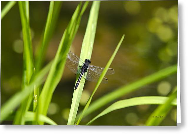 Dragon Flies Photographs Greeting Cards - Dragonfly Sunbathing Greeting Card by Christina Rollo