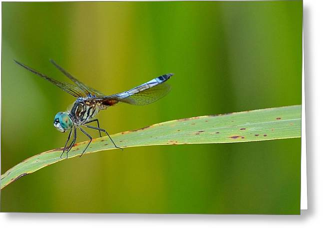 Dragonfly Picture Greeting Cards - Dragonfly Greeting Card by Todd Hostetter
