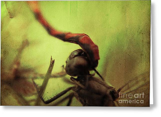 Dragonflies Greeting Cards - Dragonfly World Greeting Card by Aimelle