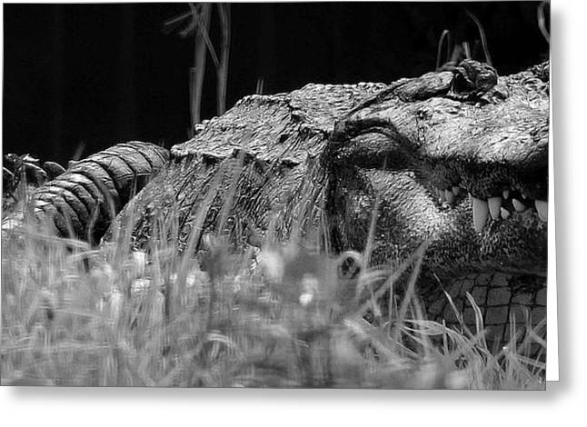 Large Scale Greeting Cards - Dragons Lair Greeting Card by Joe Serrano