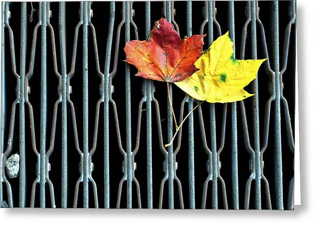 Drain Greeting Cards - Drain Greeting Card by Diana Angstadt