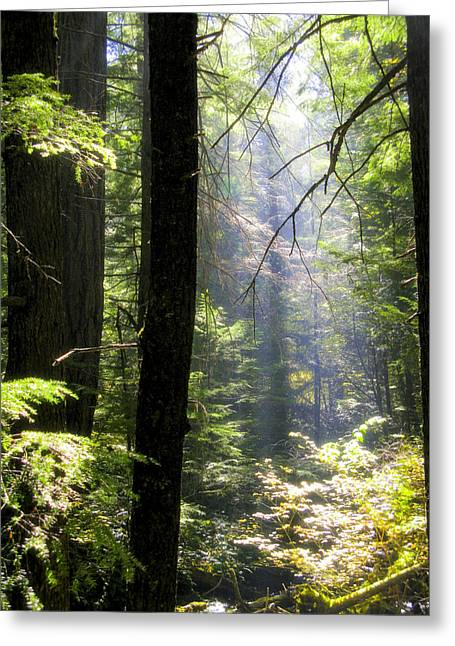 Southern Comfort Greeting Cards - Dramatic Forest Greeting Card by Diane Schuster