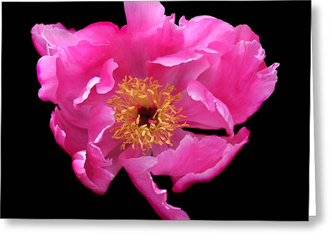 Fushia Greeting Cards - Dramatic Hot Pink Peony Flower Greeting Card by Jennie Marie Schell