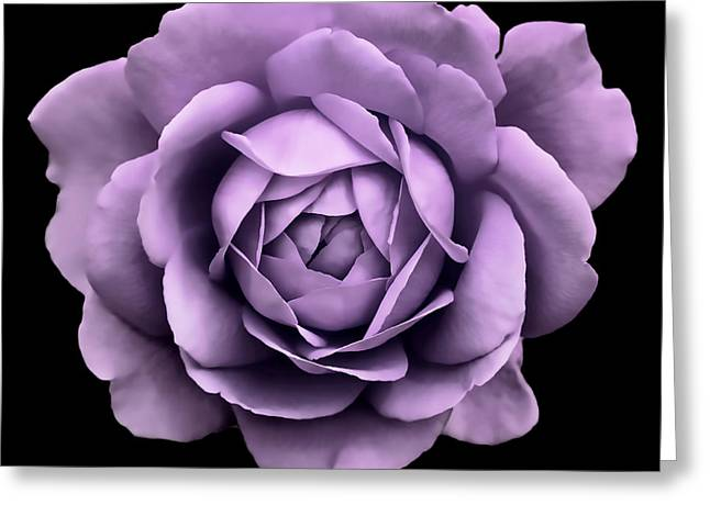 Purple Roses Greeting Cards - Dramatic Lavender Rose Portrait Greeting Card by Jennie Marie Schell