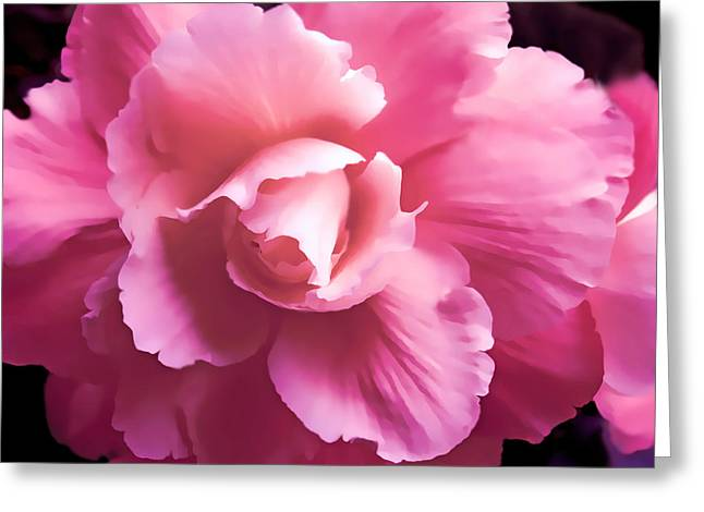 Dramatic Pink Begonia Floral Greeting Card by Jennie Marie Schell
