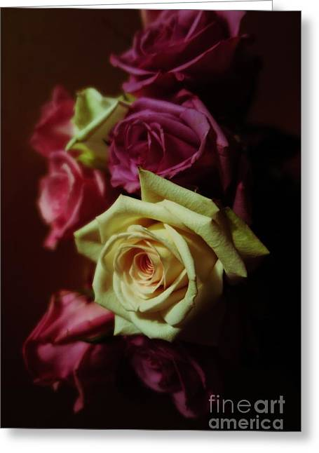 Pinks And Purple Petals Photographs Greeting Cards - Dramatic Purple And Yellow Roses Greeting Card by Tara  Shalton