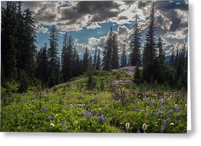 Dramatic Rainier Flower Meadows Greeting Card by Mike Reid
