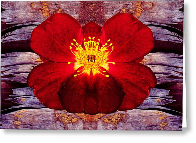 Interesting Art Greeting Cards - Dramatic red rose against lilac grunge background Greeting Card by Kim M Smith