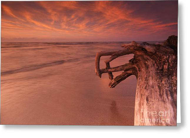 Dry Lake Greeting Cards - Dramatic sunset nature scenery of driftwood on a shore Greeting Card by Oleksiy Maksymenko