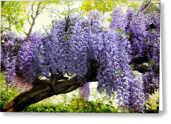 Wisteria Leaves Greeting Cards - Draping Wisteria Greeting Card by Jessica Jenney