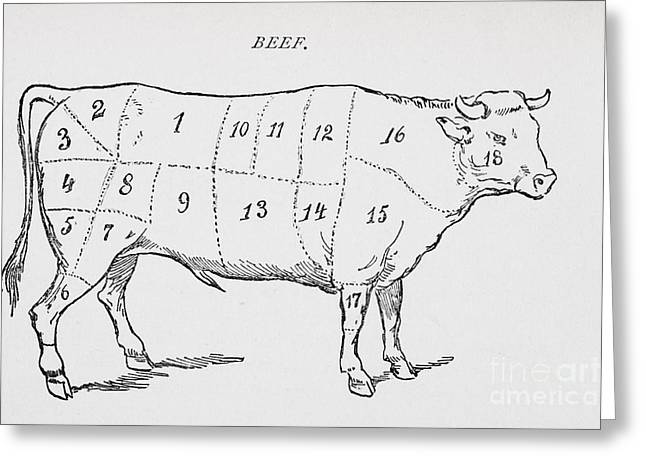 Culinary Greeting Cards - Drawing of a bullock marked to show eighteen different cuts of meat Greeting Card by English School