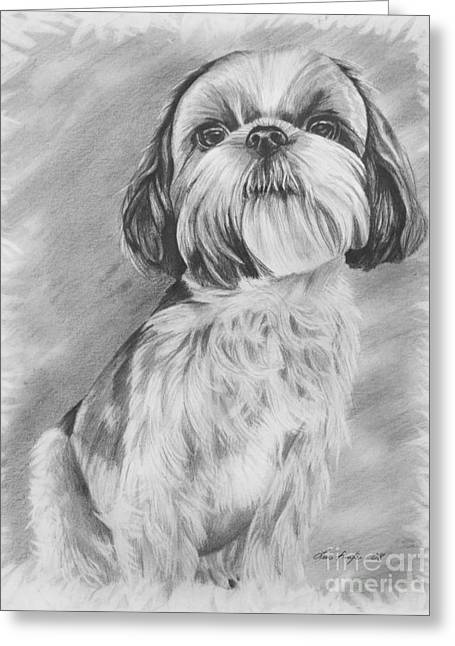 Toy Dog Drawings Greeting Cards - Drawing of a Shih Tzu Greeting Card by Lena Auxier