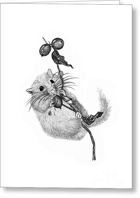 Dormouse Greeting Cards - Drawing of dormouse Greeting Card by Sylvie Bouchard