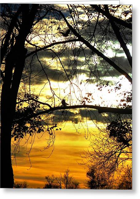 Bird In Tree Greeting Cards - Dream At Dusk Greeting Card by Gothicolors Donna Snyder