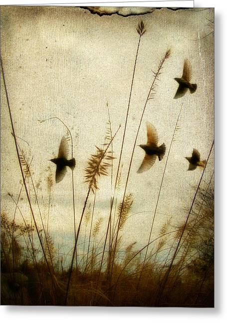 Flying Bird Greeting Cards - Dream Field Greeting Card by Gothicolors Donna Snyder