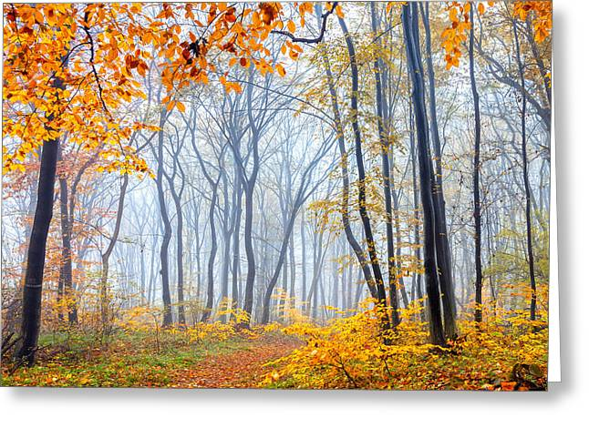 Bulgaria Greeting Cards - Dream Forest Greeting Card by Evgeni Dinev