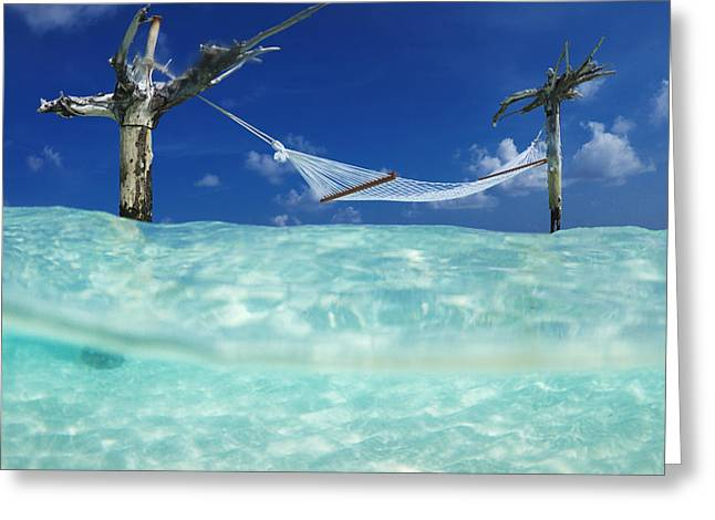 Sean Greeting Cards - Dream Hammock. Greeting Card by Sean Davey