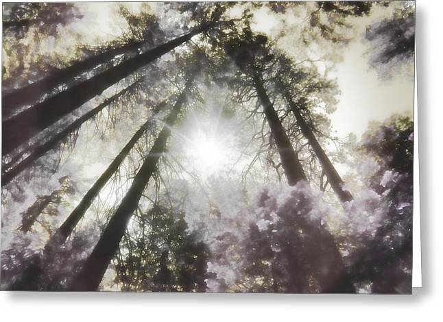 Dream Scape Greeting Cards - Dream Realm IV  Greeting Card by Devalyn Marshall