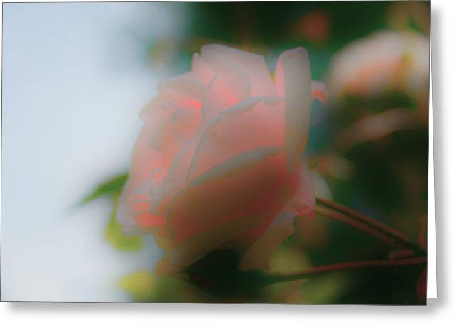 Soft Light Greeting Cards - Dream Rose Greeting Card by Nomad Art And  Design