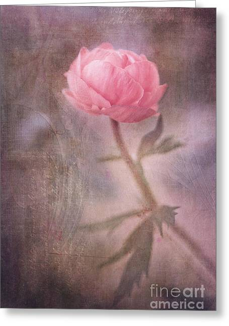 Ranunculus Greeting Cards - Dream-struck Greeting Card by Priska Wettstein