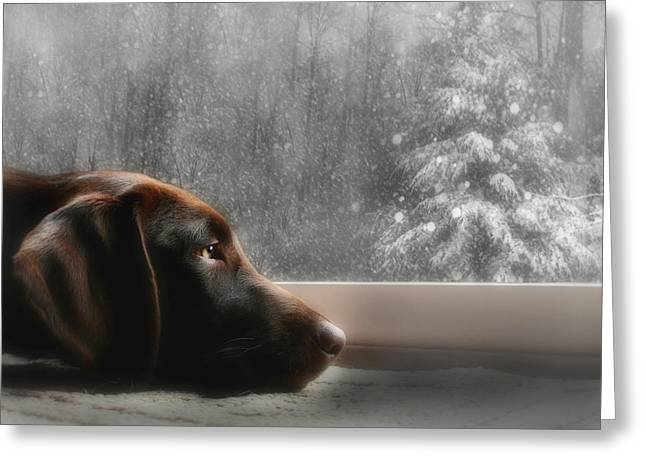 Chocolate Lab Greeting Cards - Dreamin of a White Christmas Greeting Card by Lori Deiter
