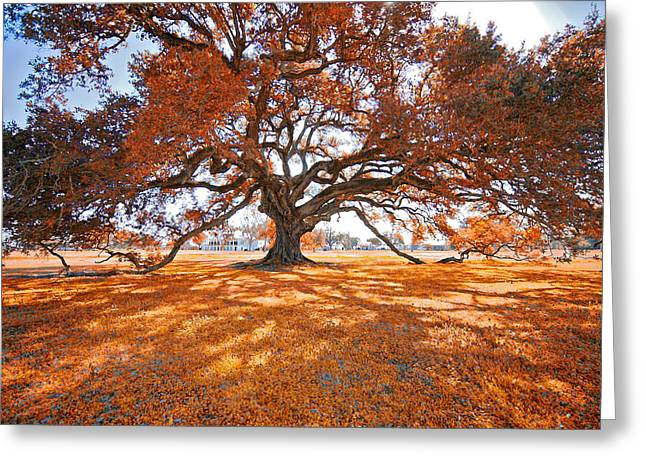 Trees In Autumn Greeting Cards - Dreaming of Autumn Greeting Card by Bonnie Barry