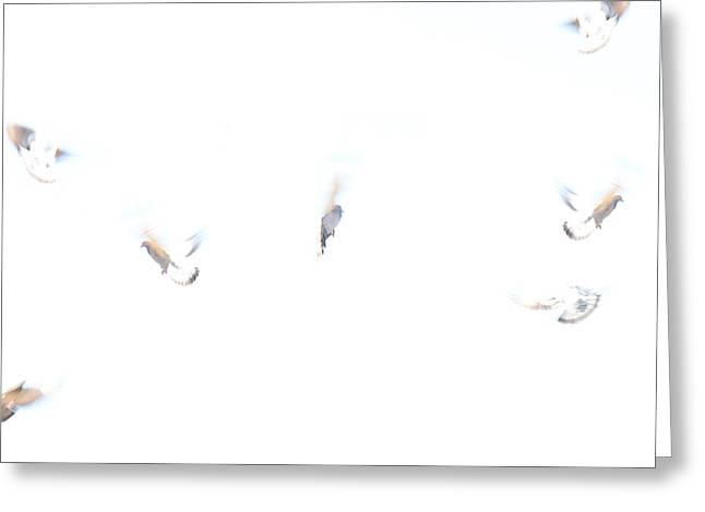 Worldly Greeting Cards - Dreaming of Flying Greeting Card by Lisa Knechtel