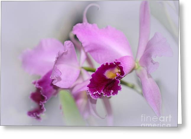 Dreaming Of Orchids Greeting Card by Sabrina L Ryan