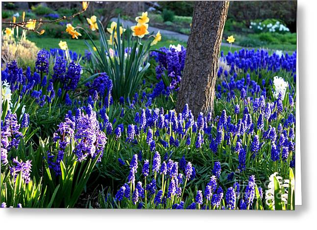 Sunlight On Flowers Greeting Cards - Dreaming of Spring Greeting Card by Carol Groenen