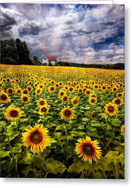 Kansas Landscape Art Greeting Cards - Dreaming of Sunflowers Greeting Card by Debra and Dave Vanderlaan