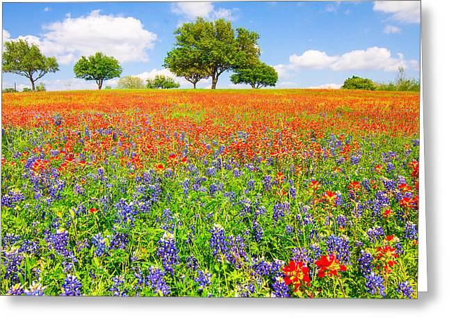 Wildflower Greeting Cards - Dreaming of wildflowers Greeting Card by Ellie Teramoto