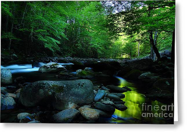 Flowing Stream Greeting Cards - Dreaming On The Streams Edge Greeting Card by Michael Eingle