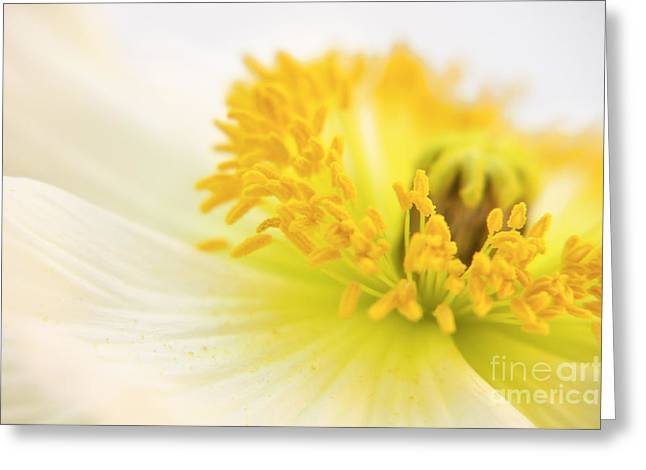 Dreaming Poppy Greeting Card by Angela Doelling AD DESIGN Photo and PhotoArt