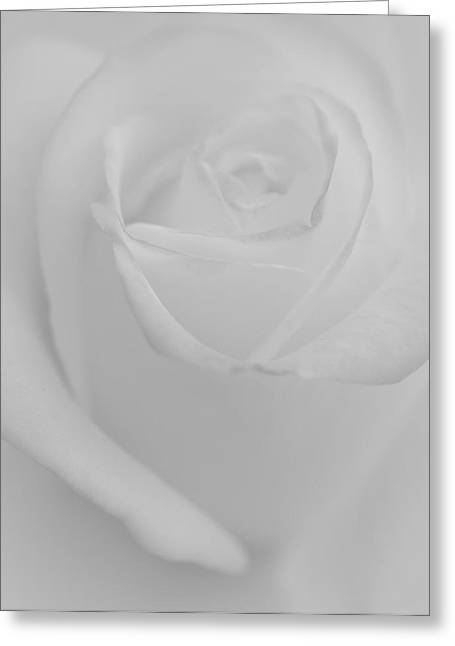 White Roses Greeting Cards - Dreaming Rose Greeting Card by  The Art Of Marilyn Ridoutt-Greene