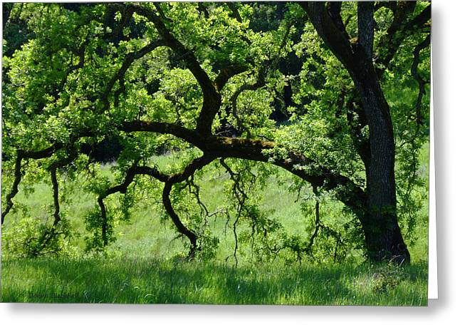 Lafayette Reservoir Greeting Cards - Dreaming Under The Old Oak Greeting Card by Donna Blackhall