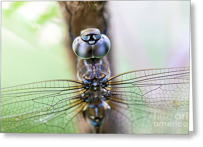 Grape Vine Greeting Cards - Dreaming with a Dragonfly Greeting Card by Scotts Scapes