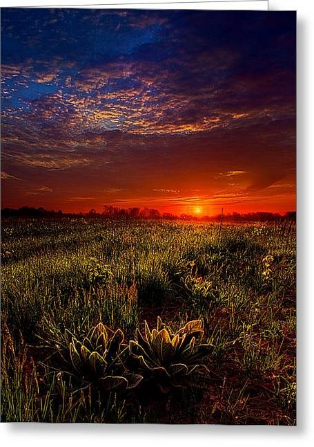 Geographic Greeting Cards - Dreamland Greeting Card by Phil Koch