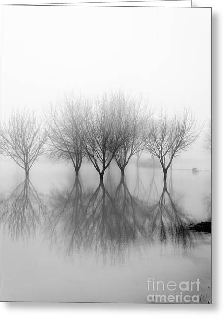 White Greeting Cards - Dreamland03 Greeting Card by Stefano Bertolucci