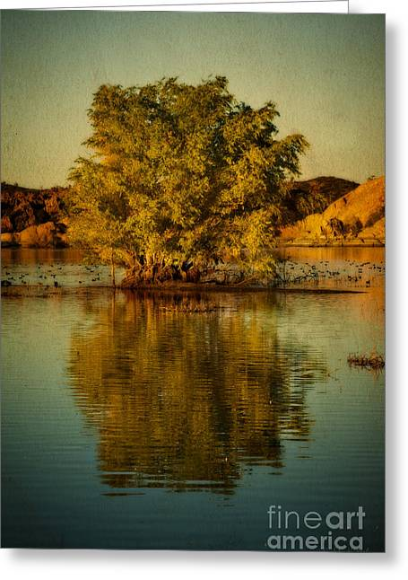 Willow Lake Greeting Cards - Dreams of Reflection Greeting Card by Medicine Tree Studios